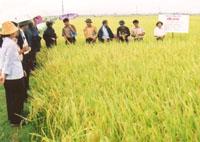 Không tăng sản lượng nông nghiệp để tránh ảnh hưởng thu nhập