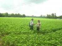 Cây đậu nành cho vùng Đồng bằng sông Cửu Long