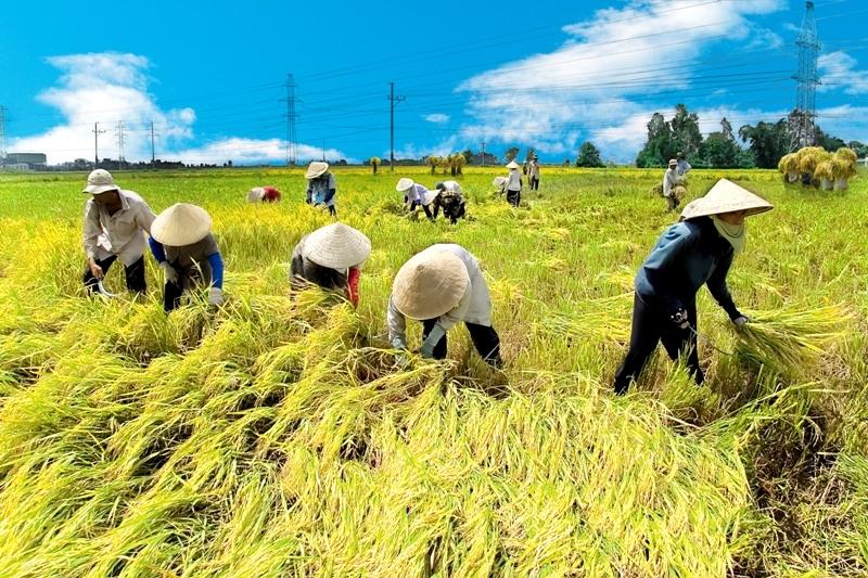 Nghiên cứu hiệu lực trực tiếp và tồn dư của phân vô cơ đa lượng đối với lúa, ngô, cà phê làm cơ sở cân đối cung cầu phân bón ở Việt Nam.